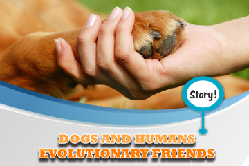 DOGS AND HUMANS EVOLUTIONARY FRIENDS